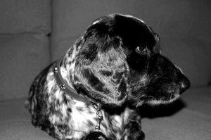 Fotografía en blanco y negro de un perro